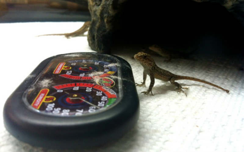 Zoo Med Dual Pet Thermometer for Terrariums review