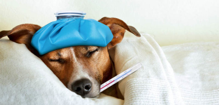 buy the best pet thermometers for each pet