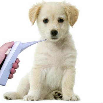 digital rectal thermometer for dogs
