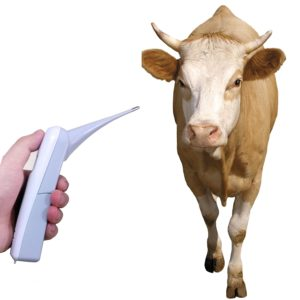 rectal thermometers for cows