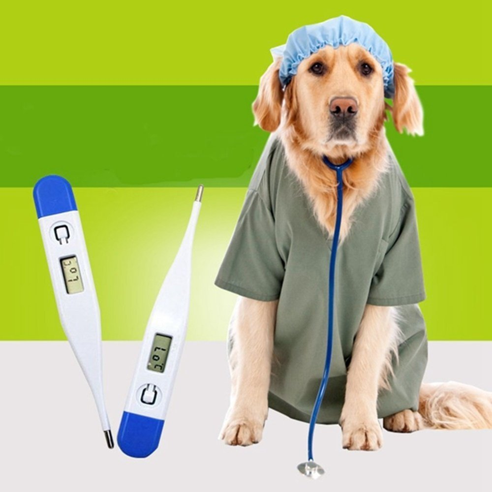 rectal thermometers for dogs